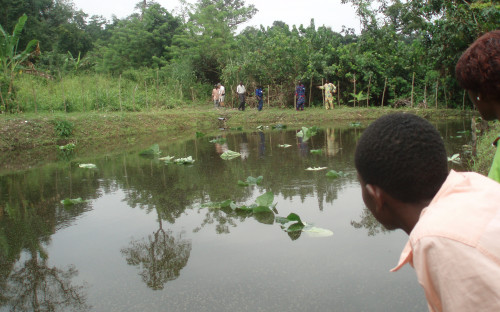 """Water and biodiversity"" fish breeding station of Naturefriends in Togo"