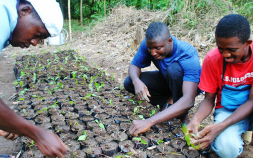 """Raise your environmental awareness"" Workshops, excursions and actions of Naturefriends Togo"